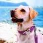 新款胸背带狗狗牵引时尚金属项圈套装狗绳宠物用品跨境定制